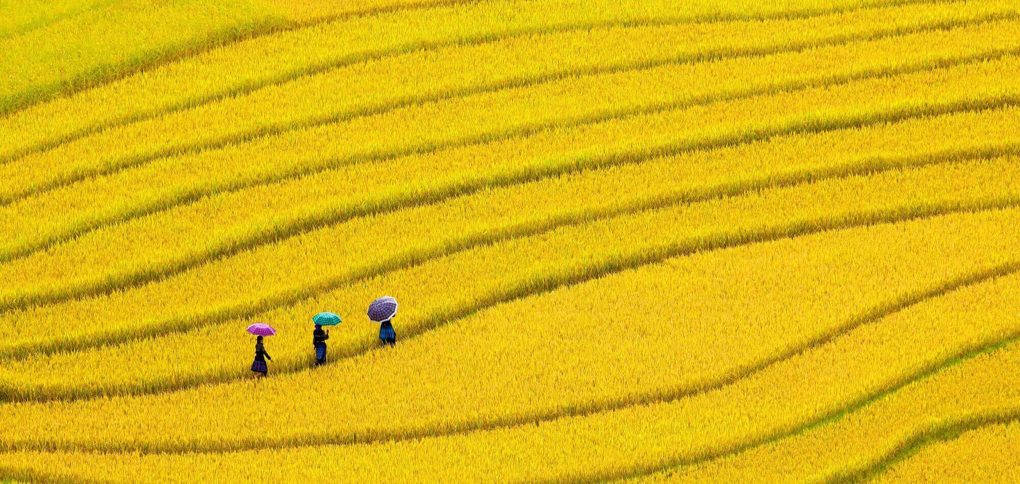 22 jours, Vietnam du Sud au Nord