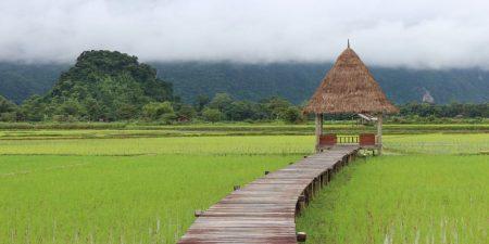 Vangvieng-paddy field