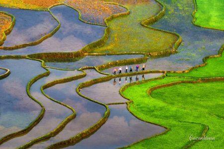 Vietnam_Scenic_rice_field trip